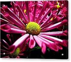 Pretty In Pink Acrylic Print by Greg Simmons