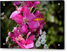 Pretty In Pink II Acrylic Print by Aya Murrells