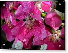 Pretty In Pink IIi Acrylic Print by Aya Murrells