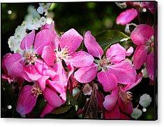 Pretty In Pink Iv Acrylic Print by Aya Murrells
