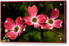Pretty In Pink Acrylic Print by James C Thomas