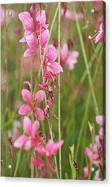 Pretty In Pink Acrylic Print by Joe Bledsoe