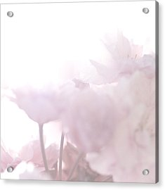 Pretty In Pink - The Whisper Acrylic Print