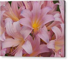 Pretty In Pink Acrylic Print by Virginia Forbes