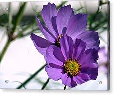 Pretty In Purple Acrylic Print by Janice Drew