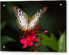 Pretty Little Butterfly  Acrylic Print by Saija  Lehtonen