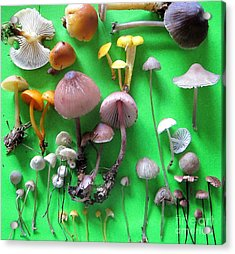 Pretty Little Mushrooms Acrylic Print