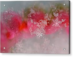 Acrylic Print featuring the photograph Pretty Little Snowflakes by Lauren Radke