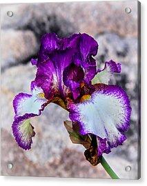Pretty N Purple Acrylic Print