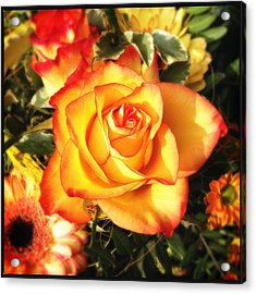 Pretty Orange Rose Acrylic Print