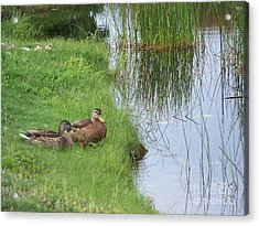 Mated Pair Of Ducks Acrylic Print by Eunice Miller