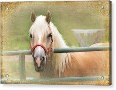 Pretty Palomino Horse Photography Acrylic Print