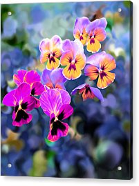 Pretty Pansies 3 Acrylic Print