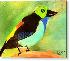 Pretty Paradise Tanager Acrylic Print