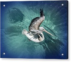 Acrylic Print featuring the photograph Pretty Pelican by Pennie  McCracken