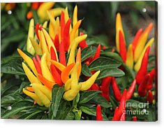 Pretty Peppers Acrylic Print