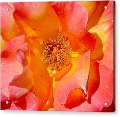 Pretty Petals Acrylic Print