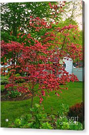 Acrylic Print featuring the photograph Pretty Pink Beech Tree by Becky Lupe