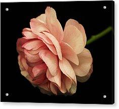 Pretty Pink Flower Acrylic Print by Carol Welsh