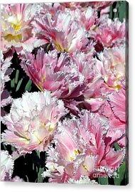 Pretty Pink Petal Acrylic Print