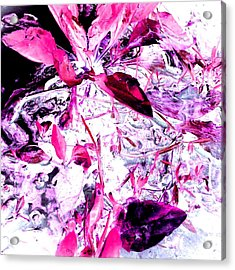 Acrylic Print featuring the photograph Pretty Pink Weeds 6 by Marianne Dow