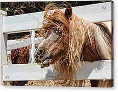 Pretty Pony After Acrylic Print