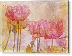 Pretty Poppy Garden Acrylic Print by Peggy Collins