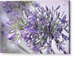 Pretty Purple Lily Of The Nile Acrylic Print by Sabrina L Ryan