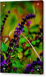 Pretty Purple Plant Acrylic Print