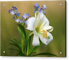 Pretty White Lily Acrylic Print