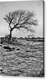 Prevailing Bw Acrylic Print by JC Findley