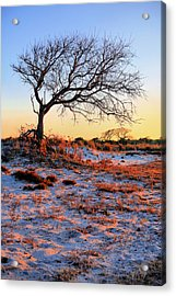 Prevailing Acrylic Print by JC Findley