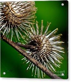 Prickly Acrylic Print by Lois Bryan