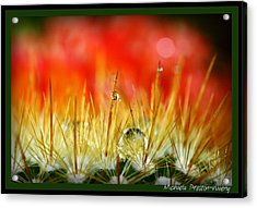 Acrylic Print featuring the photograph Prickly  by Michaela Preston