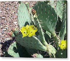 Prickly Pear Bees Acrylic Print by The GYPSY And DEBBIE