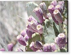 Prickly Pear Cacti Acrylic Print by Andrea Hazel Ihlefeld