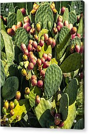 Acrylic Print featuring the photograph Prickly Pear Cactus Number Three by Bob Coates