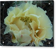 Acrylic Print featuring the photograph Prickly Pear by Jenessa Rahn