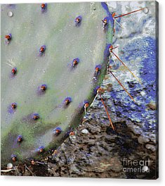 Prickly Pear Acrylic Print by Joe Pratt