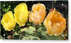 Prickly Pear No. 2 Acrylic Print