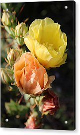 Prickly Pear No. 5 Acrylic Print