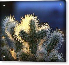 Prickly Sunset Acrylic Print