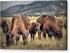 Pride Of The Herd Acrylic Print