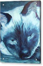 Prima Donna, Cat Acrylic Print