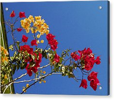 Acrylic Print featuring the photograph Primary Colors by Ginny Schmidt