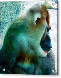 Acrylic Print featuring the photograph Primate 1 by Dawn Eshelman