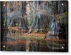 Primeval Forest Acrylic Print by Inge Johnsson