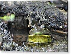 Acrylic Print featuring the photograph Bullfrog by Glenn Gordon