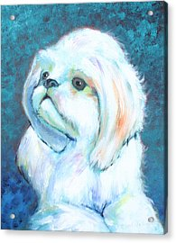 Prince The Little Dog Acrylic Print