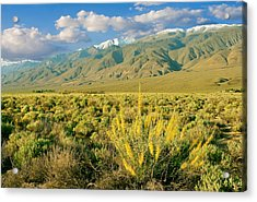 Princes Plume And White Mountains - Owens Valley California Acrylic Print by Ram Vasudev